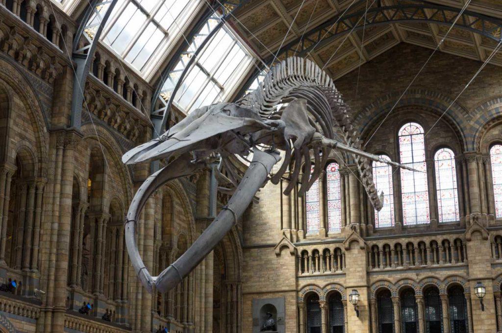 Natural History Museum Naturwissenschten Museum London