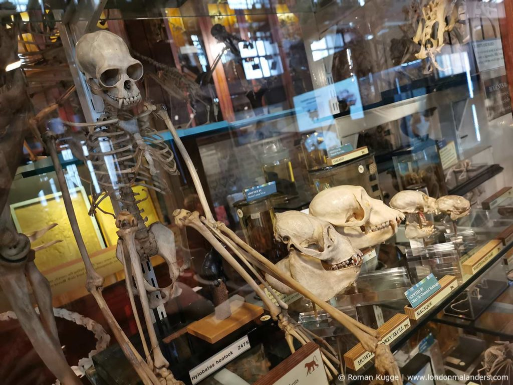 Grant Museum of Zoology London